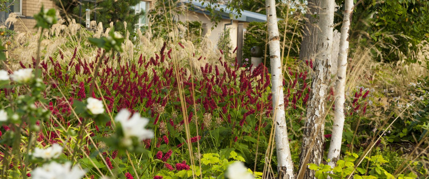 Horatio\'s Garden Scotland | Horatio\'s Garden