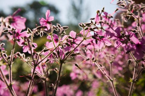 National Garden Scheme Gardens and Health week