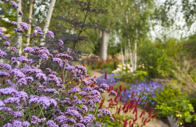 Horatio's Garden Scotland open afternoon