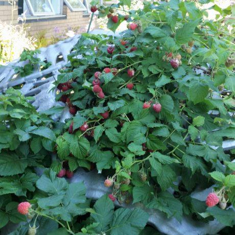 Potpourri and raspberries