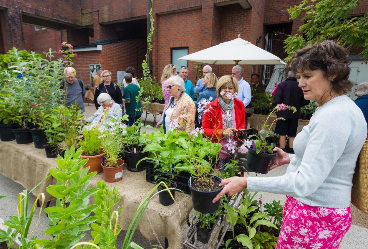 Plant Sale Crowd