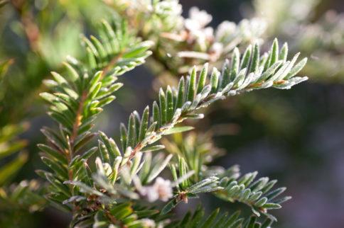 Frost in Horatio's Garden Scotland