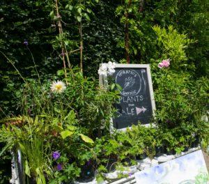 Plant sale blackboard
