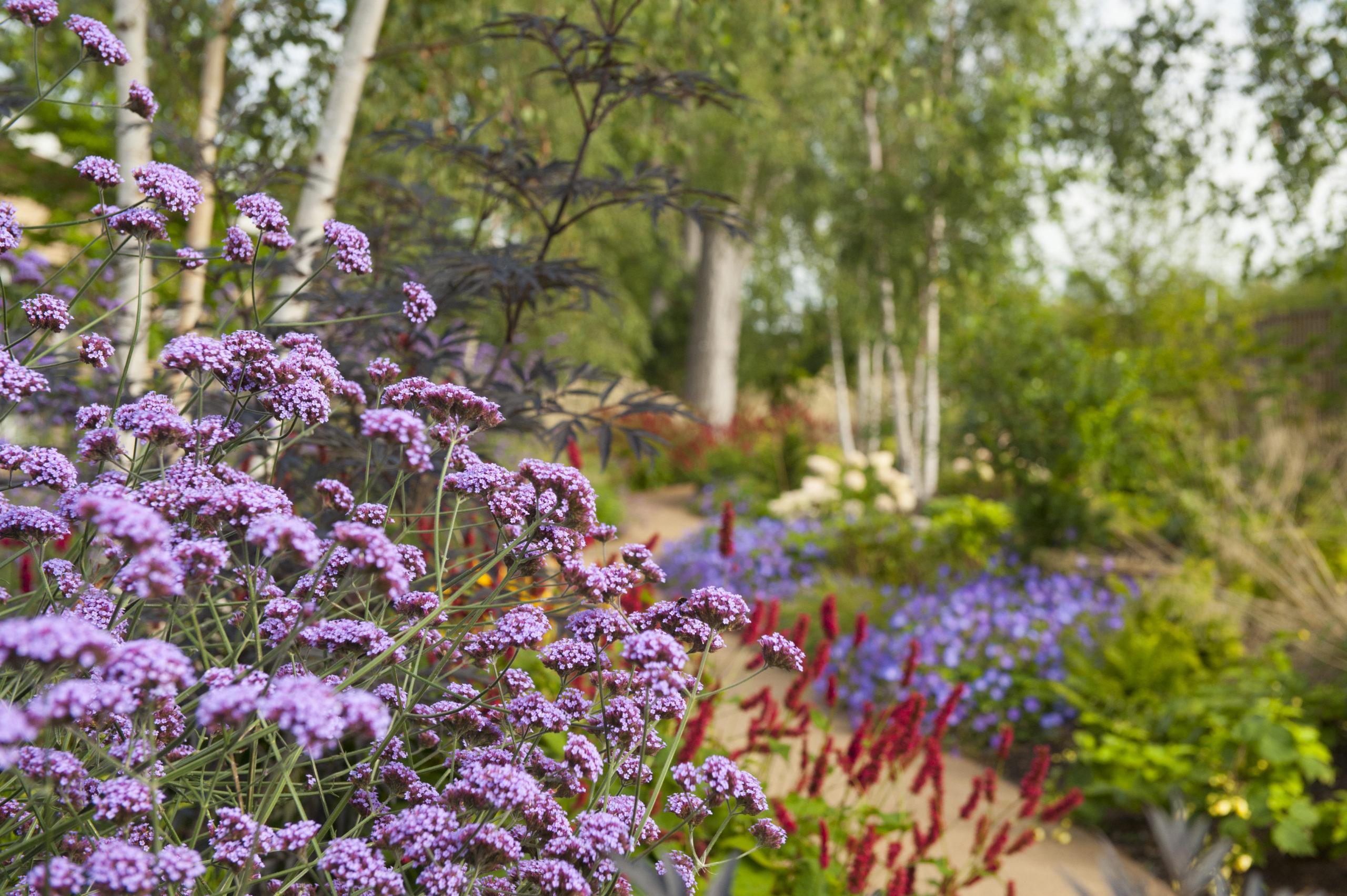 Scotland Woodland Garden