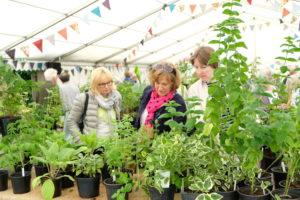 Plant sale visitors
